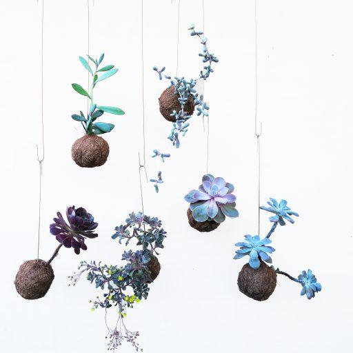 cropped-lillaplanteplaneter-1.jpg