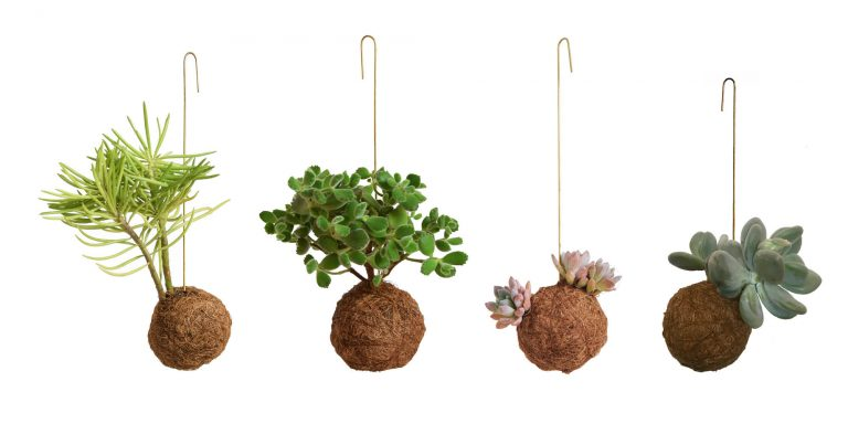 Planteplaneter1