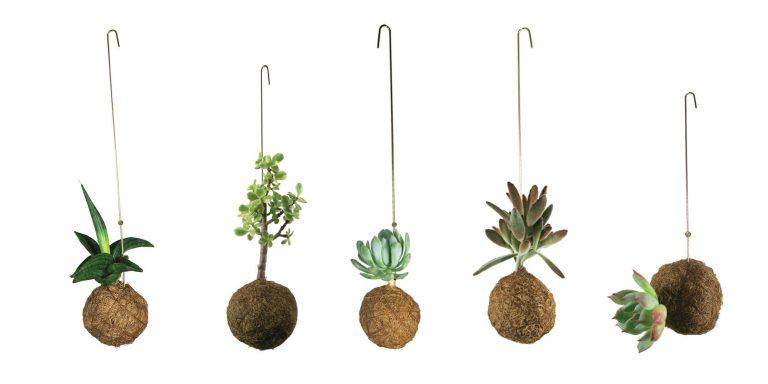 Planteplaneter22